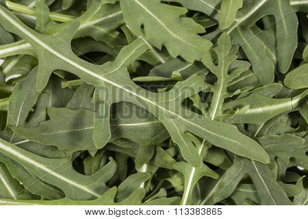 Background Of Fresh Leaves Of Rucola