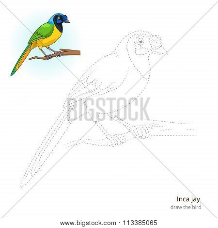 Inca jay bird learn to draw vector