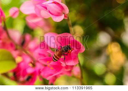 Bee eats flower