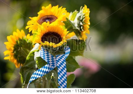 sunflowers with a blue white loop