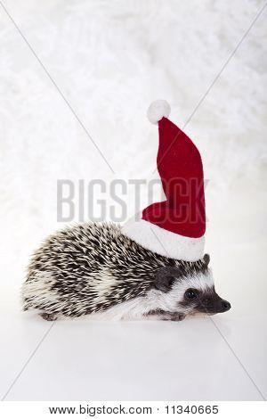 Hedgehog christmas