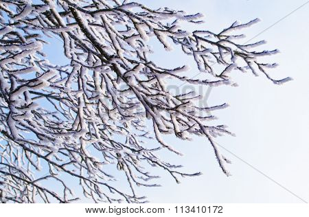 Snow covered tree branches on a sunny day