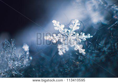 Macro shot of real snow flake