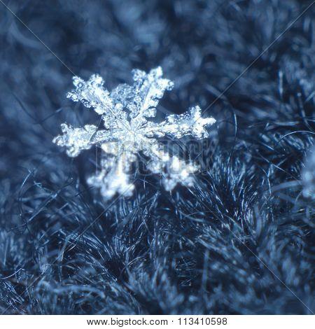 Macro shot of real snowflake