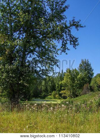 Beautiful Landscape On The Shore Of Lake Forest