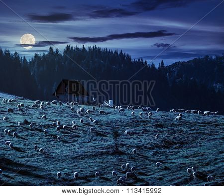 Flock Of Sheep On The Meadow Near  Forest In Mountains At Night