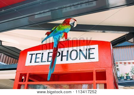 Parrot on phone booth in a cafe