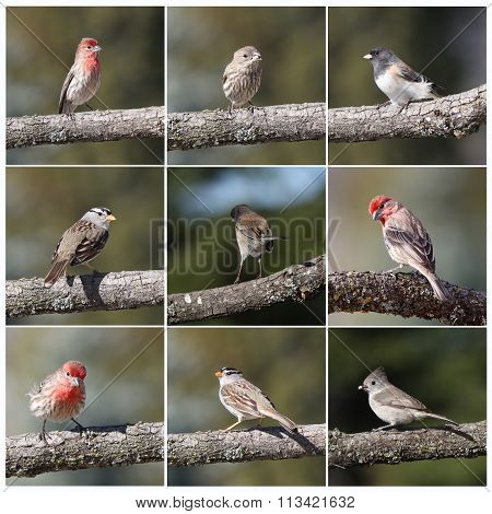 Nine photographs of wildlife birds.