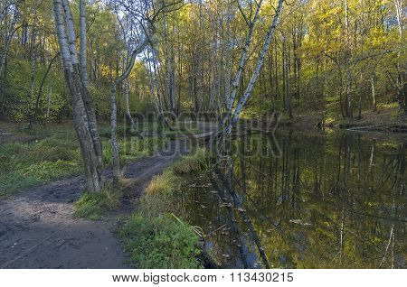 Forest Park On A Sunny Autumn Day