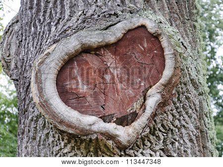 Heart Shape Bark Of Tree