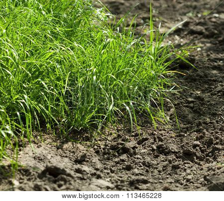 Grass On Arable Land