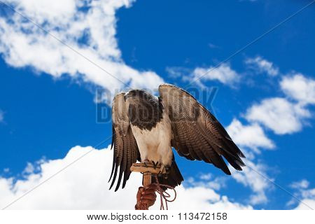 proud eagle on a background of blue sky