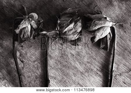 Abstract black and white withered rose