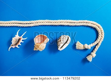 Rope With Set Of Various Sea Shells