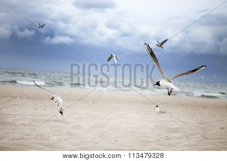 seagulls at the seaside