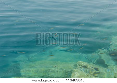 Fish Floating In The Aegean Coast