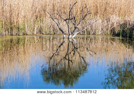 Reflection Of A Tree Around Flix, Spain