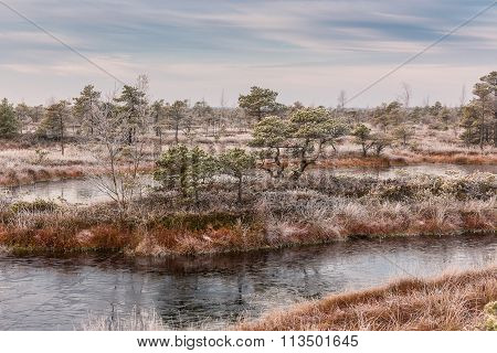 Frosty Morning In Raised Bog. Landscape With The Frozen Plants And The Hoar-frost. Kemeri National P