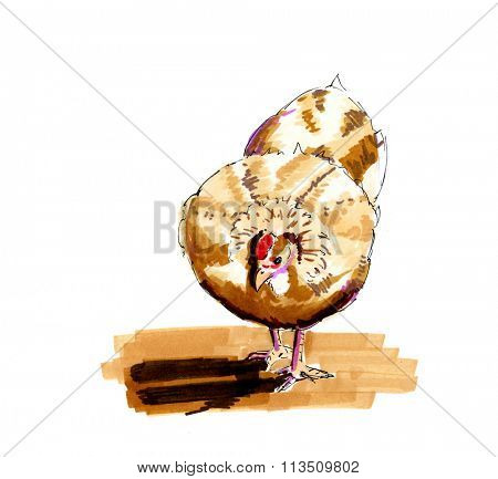 Hand drawn illustration brown chicken isolated over white background