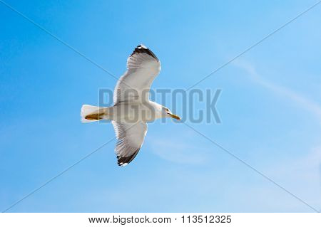 Fish seagull flying in the blue sky, freedom concept,  place for text