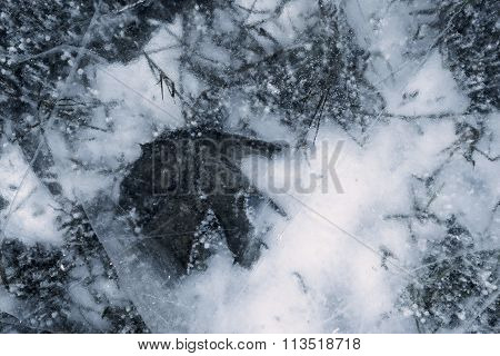 Silvery Transparent Texture Of Natural Ice With A Leaf Plant