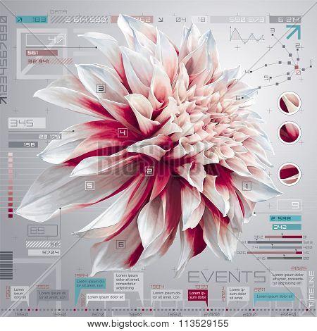 Dahlia Infographic Set