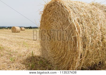 Round Hay Bales In A Field In Paphos, Island Of Cyprus