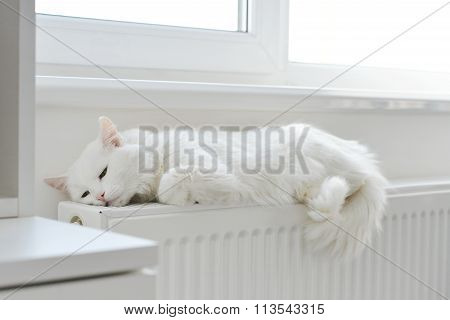 Cat Relaxing On The Radiator