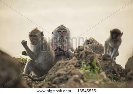 Wild Monkey Family Habitat Wildlife Conservation