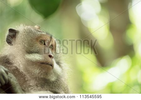 Wild Monkey Wildlife Closeup Nature Background