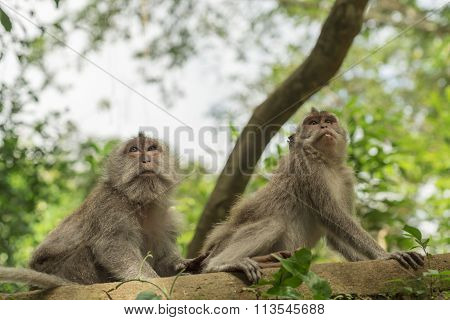 Wild Monkey Tree Habitat Nature Wildlife