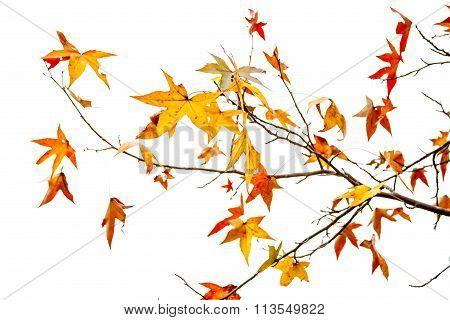 Autumn Leaf Abstract