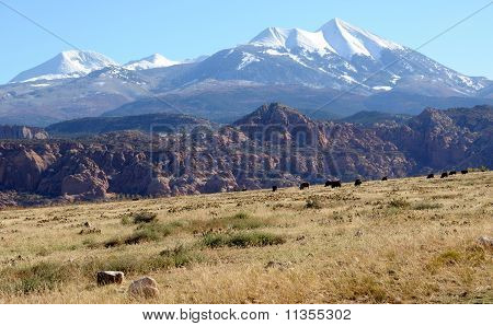 Moab Ranch with view of La Sal Mountains
