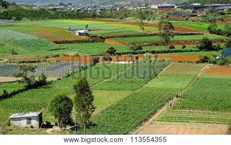 Agriculture Area, Dalat, Vietnam, Field, Vegetable Farm