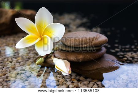 Plumeria Or Frangipani Decorated On Water And Pebble Rock In Zen Style