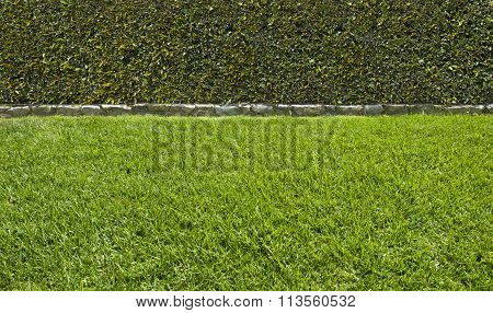 Grass And Hedge Background