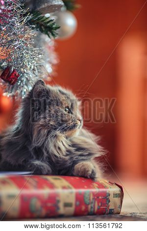 Waiting Santa Claus Concept. Cute Cat Laying Over Christmas Present.