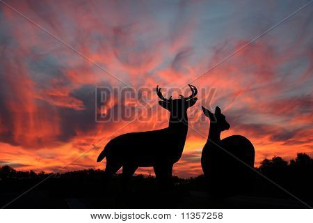 Doe and Buck Whitetail Deer