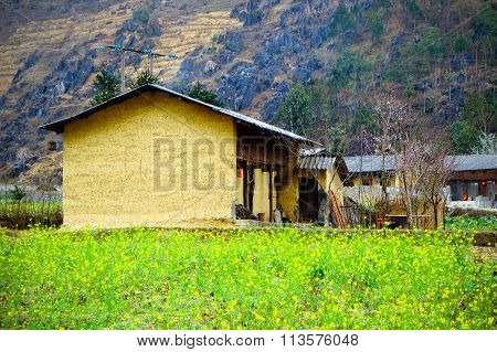 yellow canola or rapeseed fields in Hagiang, vietnam