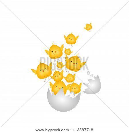 Small Chicken Explode