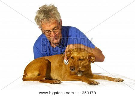 Veterinair With Dog