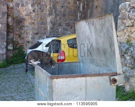 A Cat Looking To The Rubish Bin