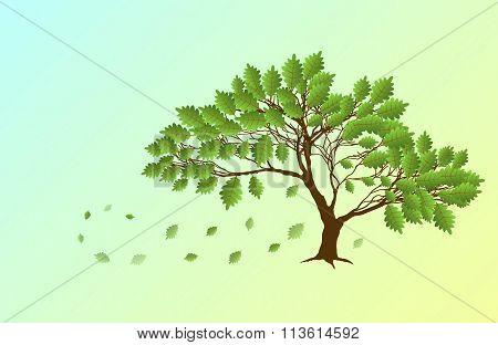 Spring English Oak
