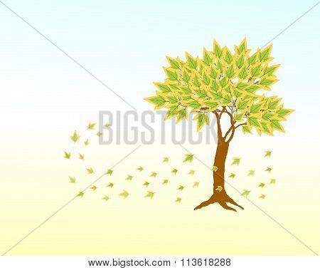 Spring Green Maple  Tree