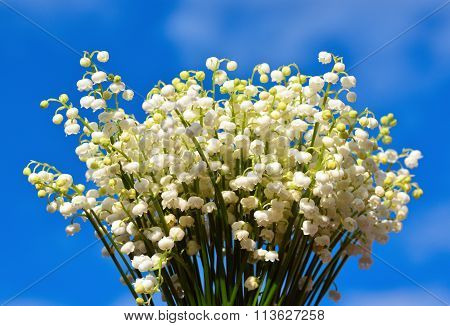 Bouquet of lily of the valley on blue sky background