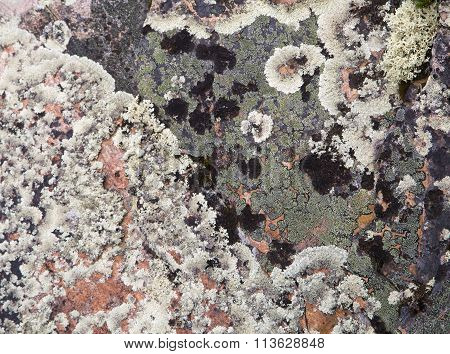 Lichen on a rock