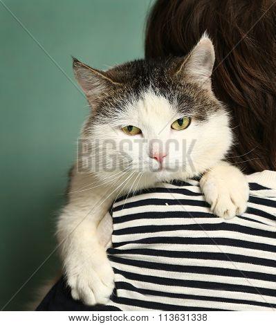 Siberian Cat Close Up Muzzle Portrait