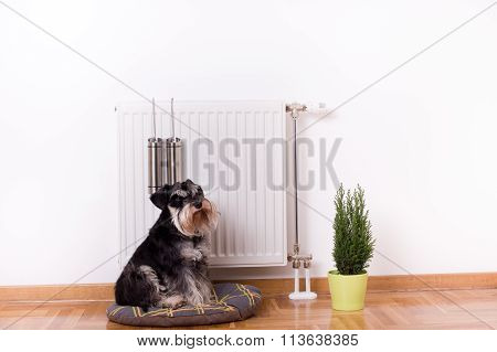 Dog Sitting In Front Of Heater