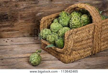 Harvest Of Artichokes In The Basket