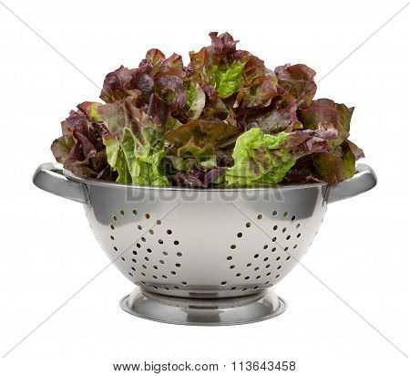 Red Leaf Lettuce In A Stainless Steel Colander